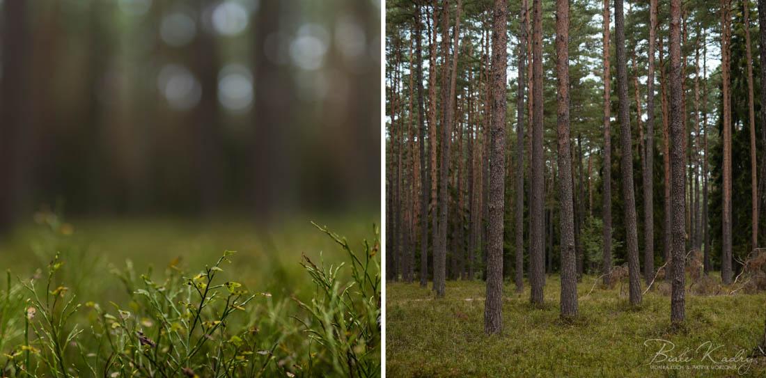 fotograf_slubny_Krakow_sesja_plenerowa_DagDarblog13